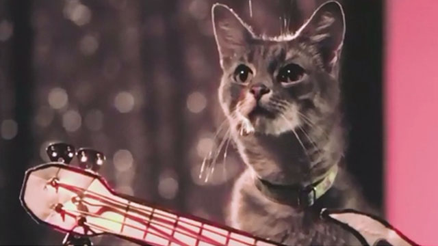 Holy Fuck - Red Lights - cat with guitar