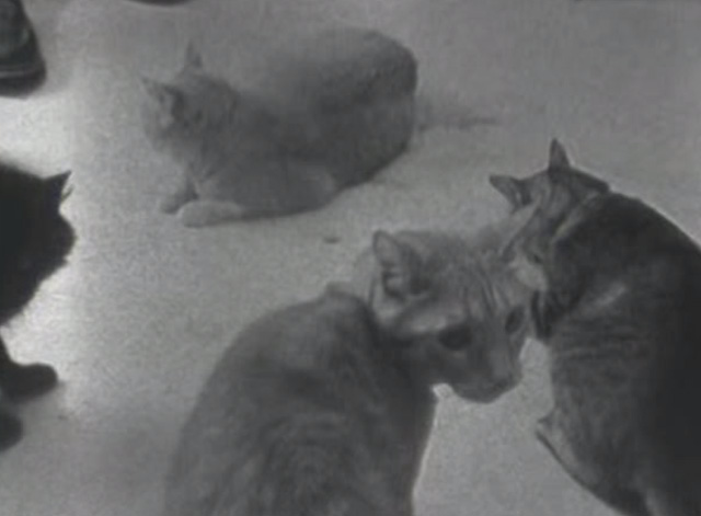Veruca Salt - Seether - tabby cats on floor