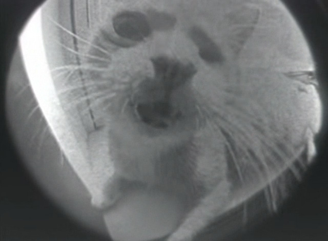 Veruca Salt - Seether - one-eyed cat through fish eye lens