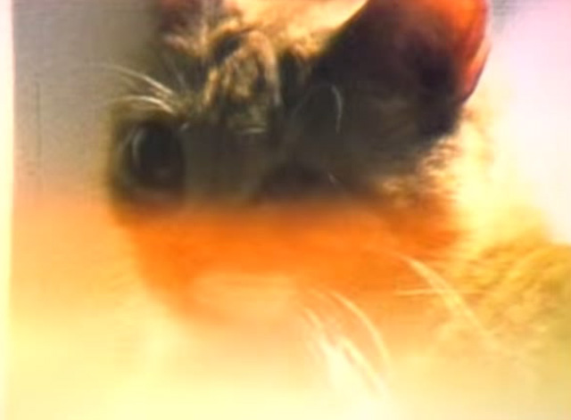 Veruca Salt - Seether - tabby cat in soft orange light