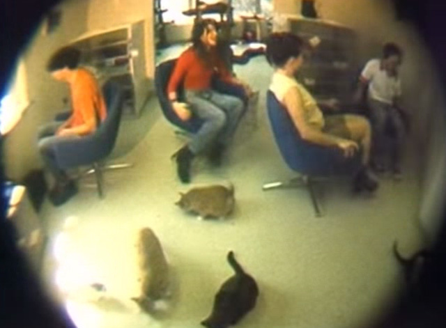 Veruca Salt - Seether - band with multiple cats in shelter
