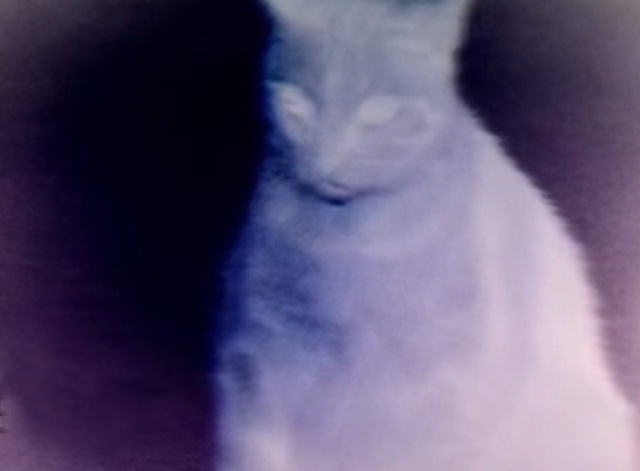 Veruca Salt - Seether - cat in purple negative
