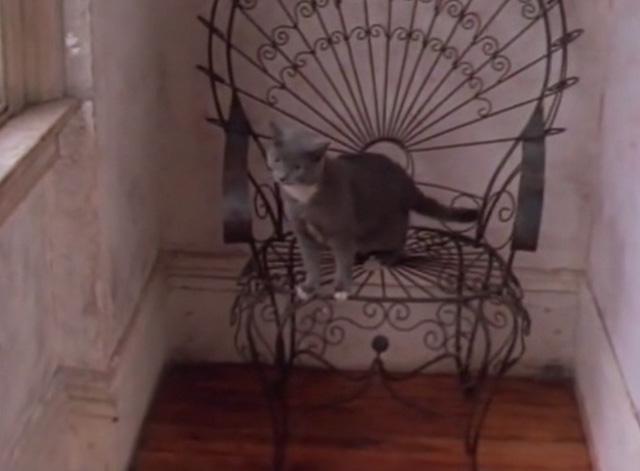 Stay (I Miss You) - Lisa Loeb - gray and white cat sitting on chair