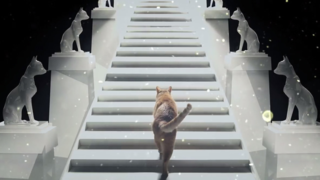 Sucker For Your Love - ginger tabby cat climbing ethereal staircase