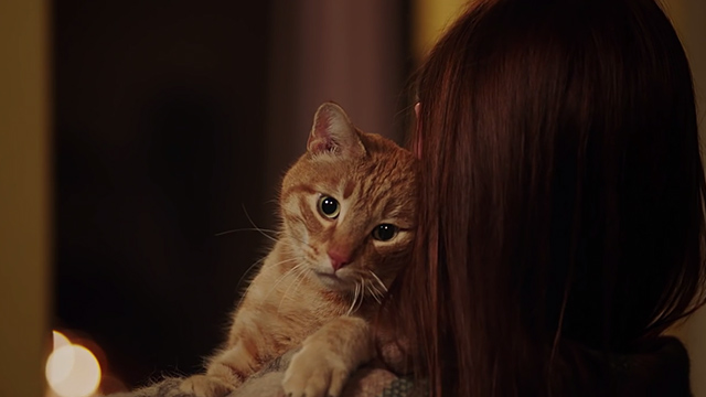 Sucker For Your Love - ginger tabby cat in arms of woman
