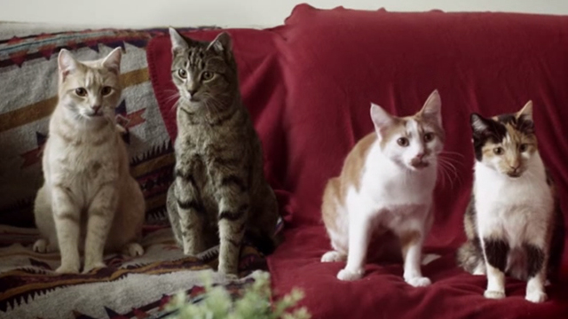 Wonky - cats on couch singing