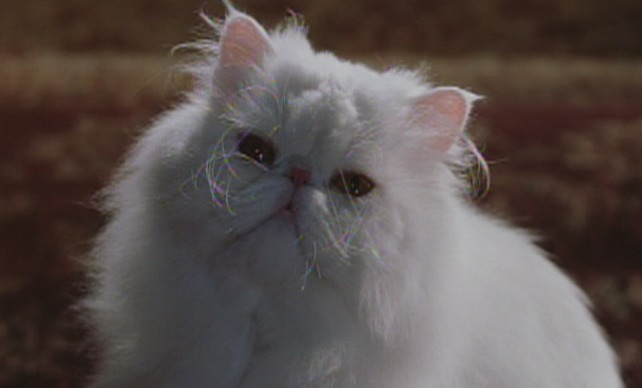 Cats & Dogs (2001) - Cinema Cats
